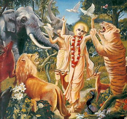 Can animals practice spirituality?